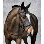 Passier® Jupiter Bridle with Recessed Noseband