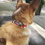 C4 Dog Collar Personalization