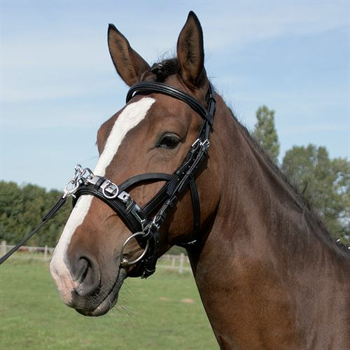 Horse Lunge//Longe Line from Kavalcade Imported from Germany Brand New