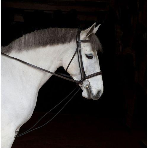 Dover Saddlery® Neck-Stretcher
