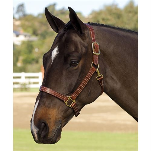 Dover Saddlery® Premium Triple-Stitched Halter