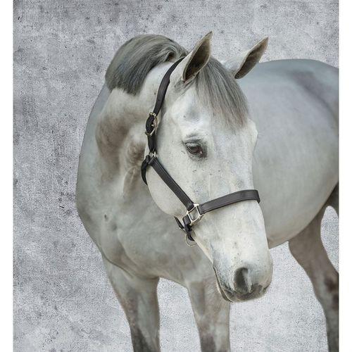 Dover Saddlery® Padded Leather Halter