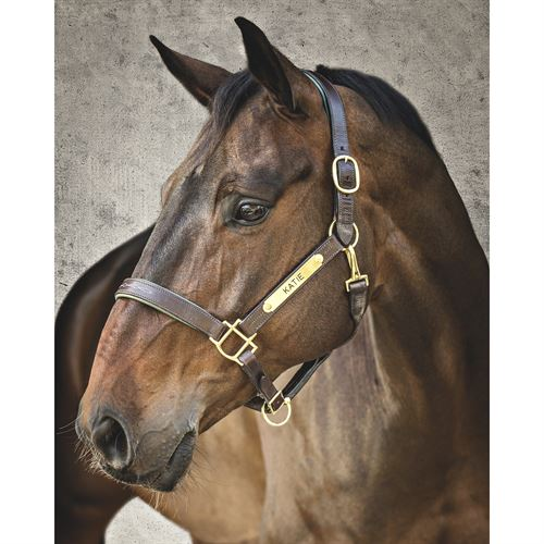 Dover Saddlery® Classic Fancy-Stitched Leather Halter