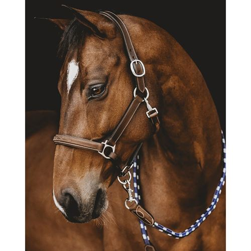 Arion Classic Anatomic Halter with Lead