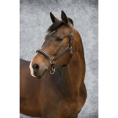 Dover Saddlery® Fancy-Stitched Comfort Halter