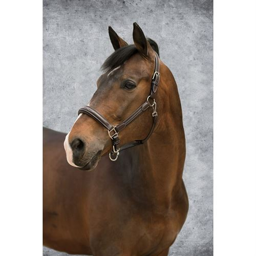 Dover Saddlery® Fancy-Stitched Comfort Halter
