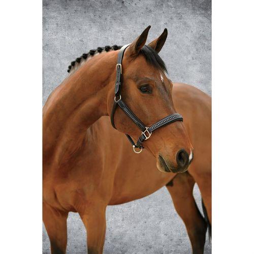 Dover Saddlery® Crystal Comfort Halter