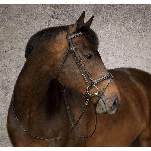 Dover Saddlery® Single Crown Flash Bridle