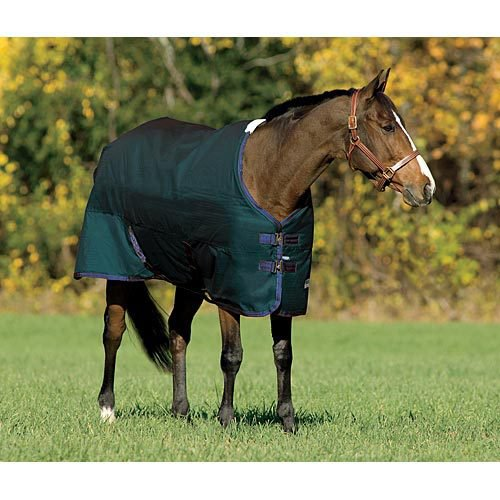 Rider's International® by Dover Saddlery® Medium-Weight Turnout Blanket