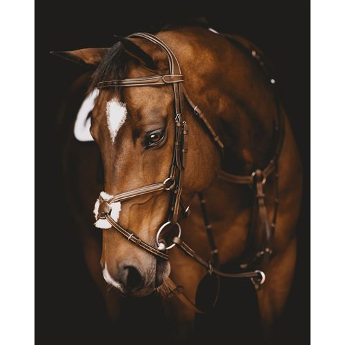 Arion Anatomic Figure 8 Bridle