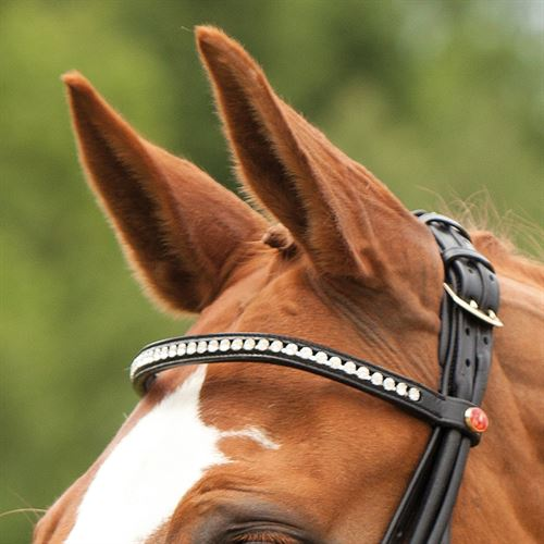 Brand New German Import In black rolled leather Weymouth Bit Lip Strap