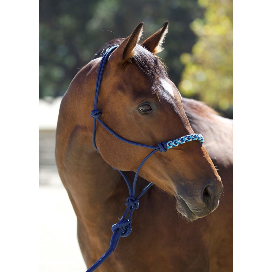 Rope and halter holder