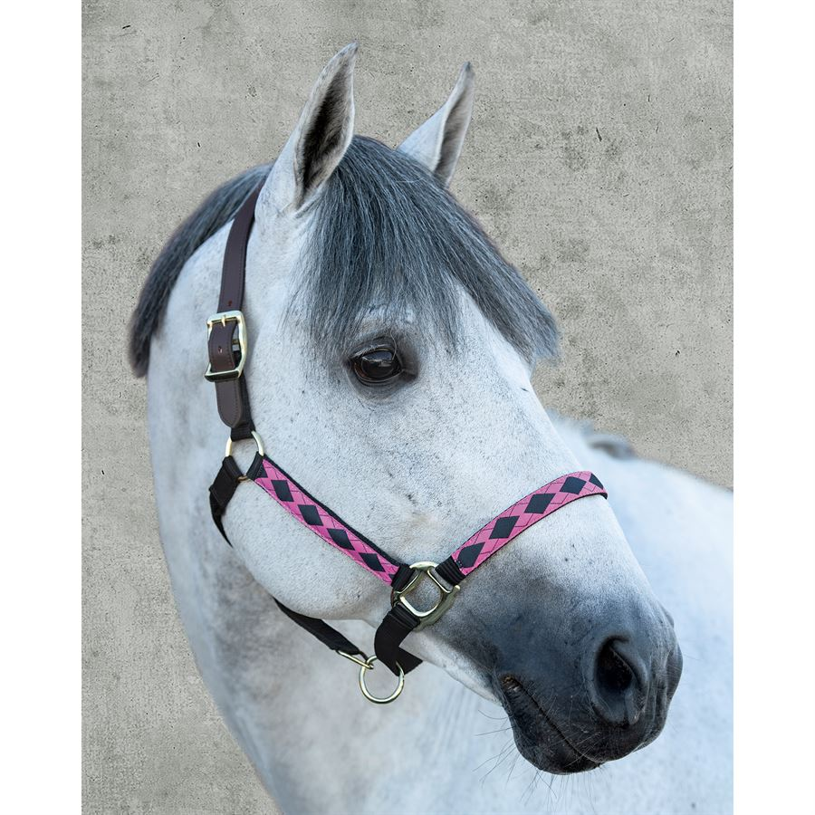 Smith Saddlery green nylon cob sized halter horse tack equine
